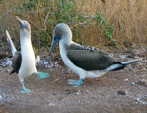 Why Are the Galapagos Islands Famous