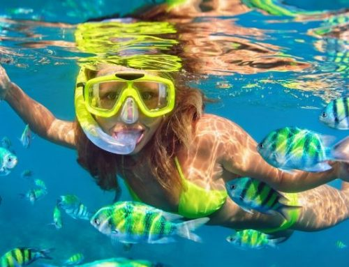 How to Prepare for a Snorkel and Dive Cruise